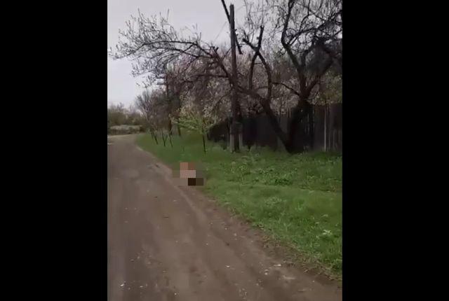 Собака в коробке