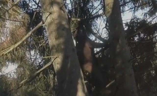 Человек залезает на дерево