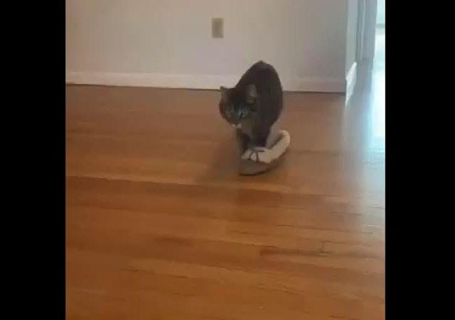 Кот - фетишист