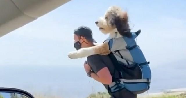 Собака едет вместе с мужчиной