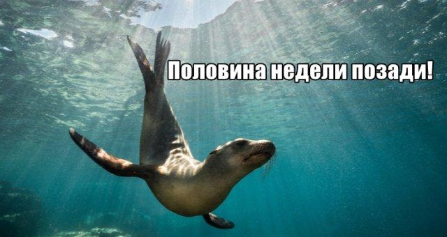 Трынделка - 03.06.2020