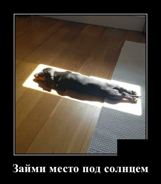 1591270416_demotivatory_15.jpg