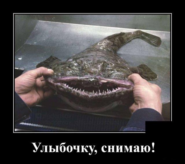 1591270494_demotivatory_12.jpg