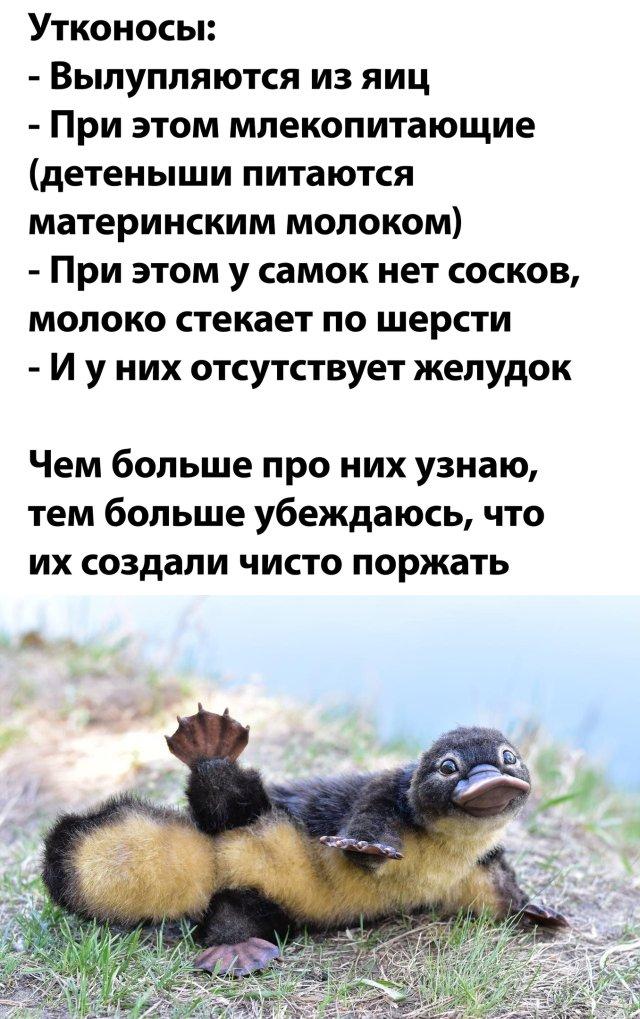 1591280622_podb_14.jpg