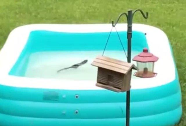 Белка в бассейне
