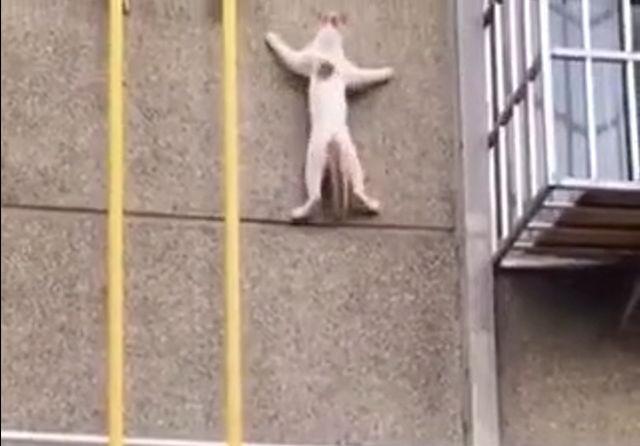 кот повис на стене