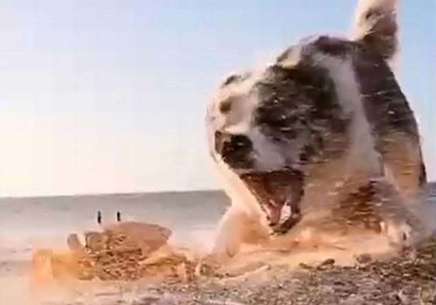 Собака дерется с крабом