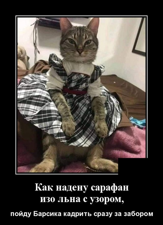 1593175413_demotivatory_16.jpg