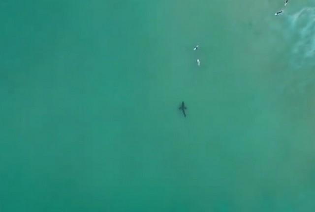 Акула у берегов ЮАР