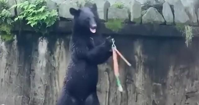 Медведь кунг-фу