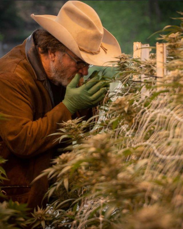 Джеймс Белуши и его конопляная ферма