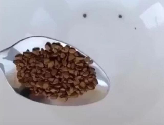 Лайфхак: как сделать капучино дома