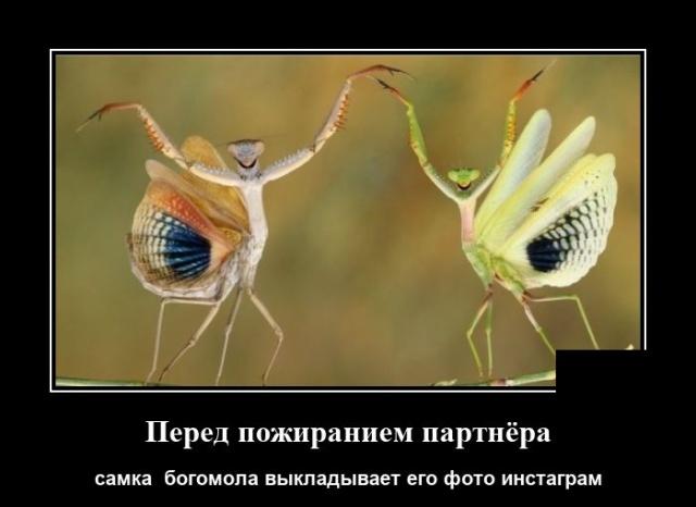 1596108948_demotivatory_06.jpg