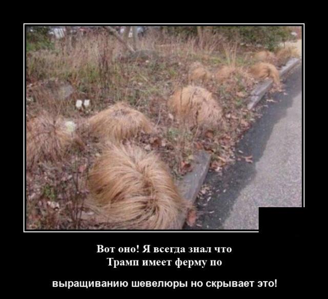1596109027_demotivatory_09.jpg