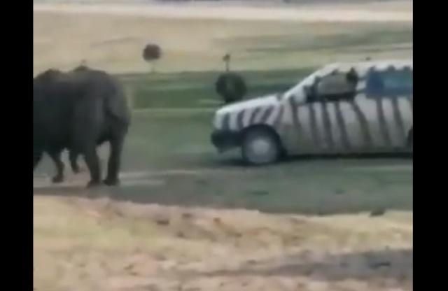 Не нужно злить носорога