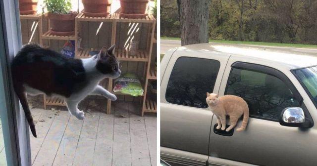Коты, над которыми не властны законы физики