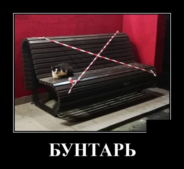 1597918046_demotivatory_12.jpg