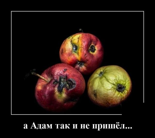 1597918086_demotivatory_09.jpg