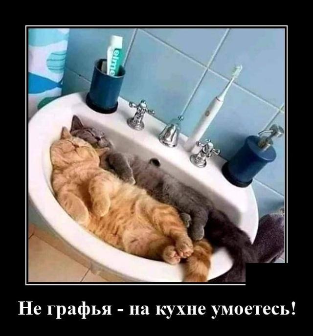 1597918110_demotivatory_17.jpg