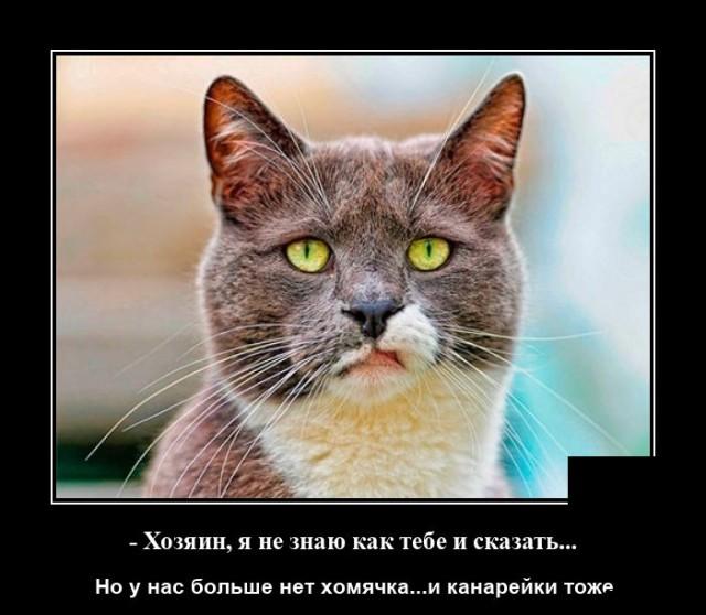 Демотиватор про кота и хомячка