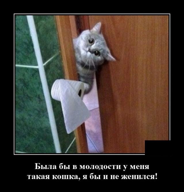 Демотиватор про кота с туалетной бумагой