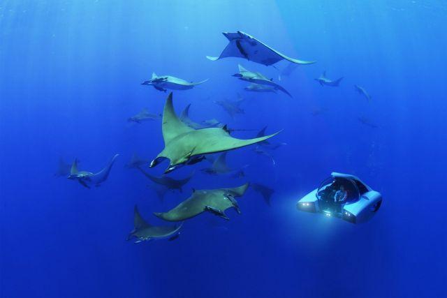Подлодка под водой со скатами