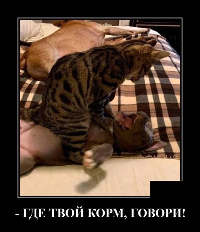 Демотиватор про собаку и кота