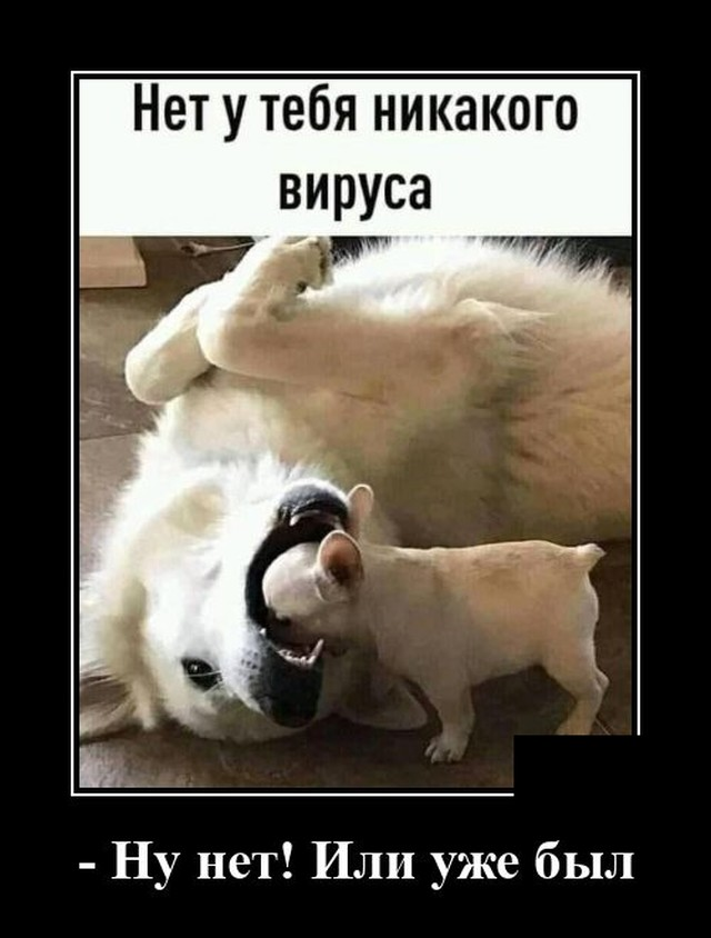 Демотиватор про собак и вирус