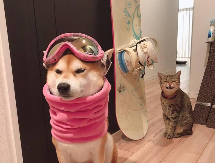 Собака-сноубордист и кот
