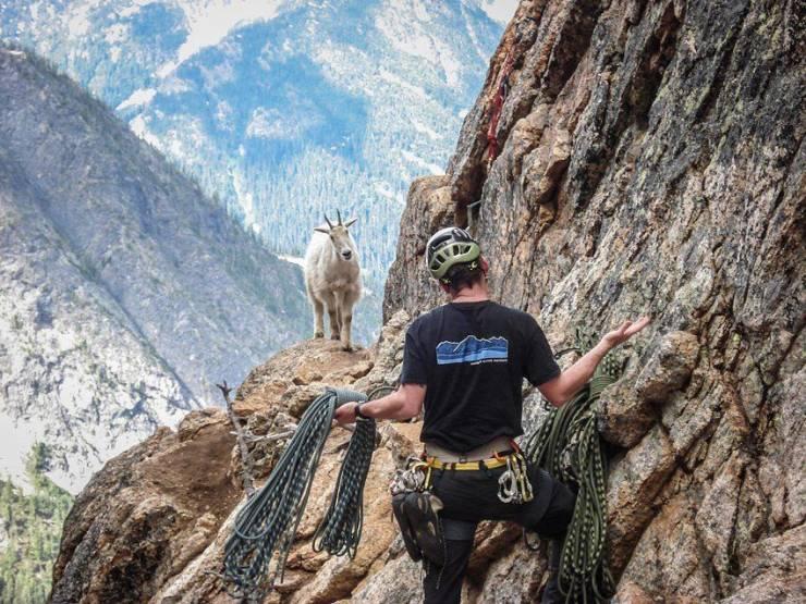 Альпинист и горный козел