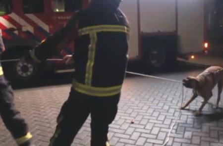 Собака помогает пожарным