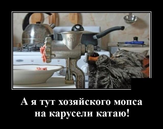Демотиватор про кота и мясо