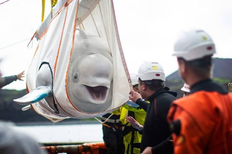 Транспортировка дельфина