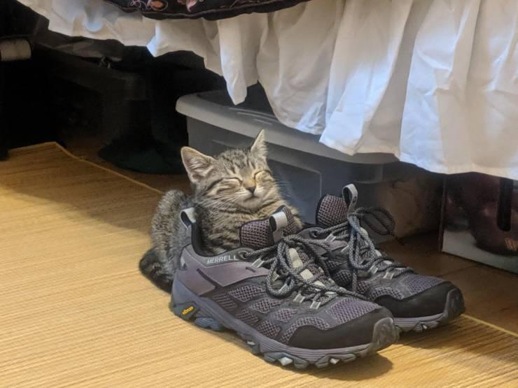 Котик в кроссовках