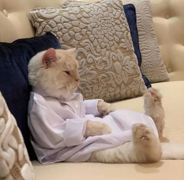 Кот сидит в рубашке