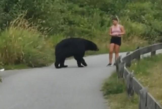 Медведь и бегунья