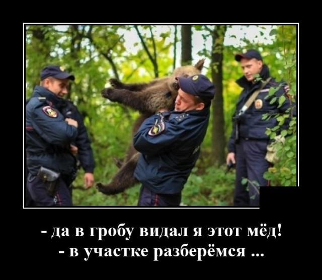 Демотиватор про медведя и мёд