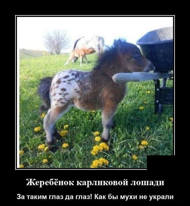 Демотиватор про карликовую лошадь