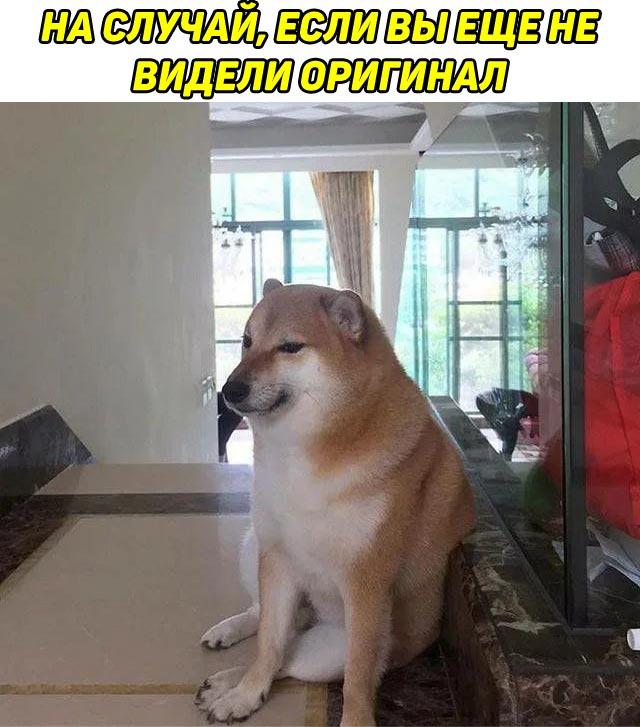 Оригинал фото с собакой Doge