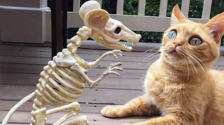 Кот и скелет мыши