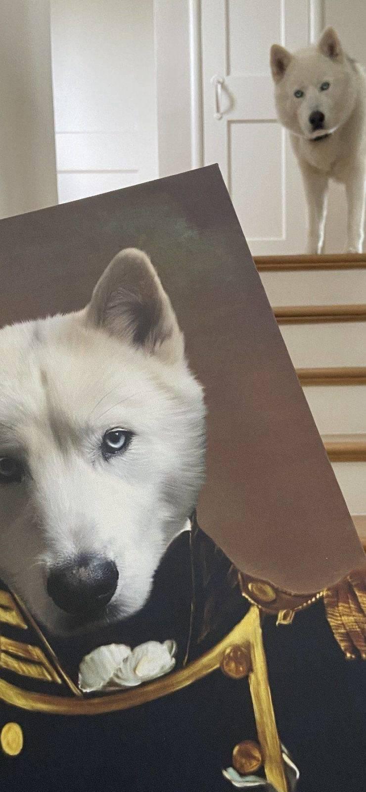 Рисунок собаки в костюме
