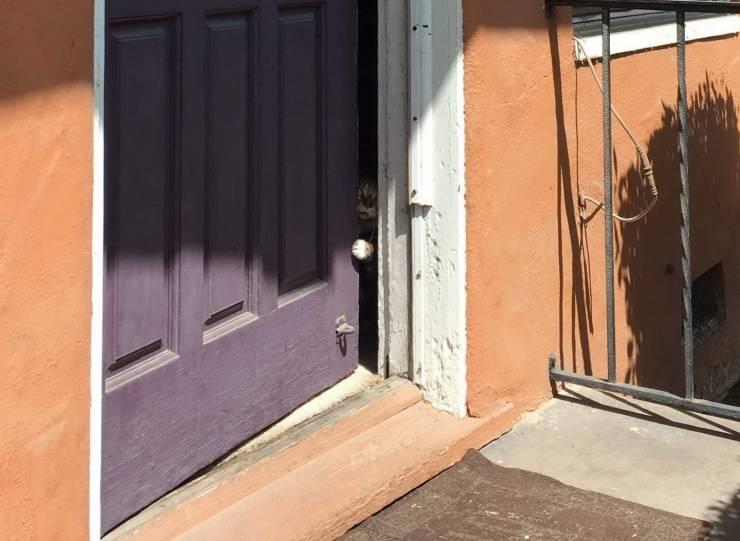 Кот спрятался за дверью