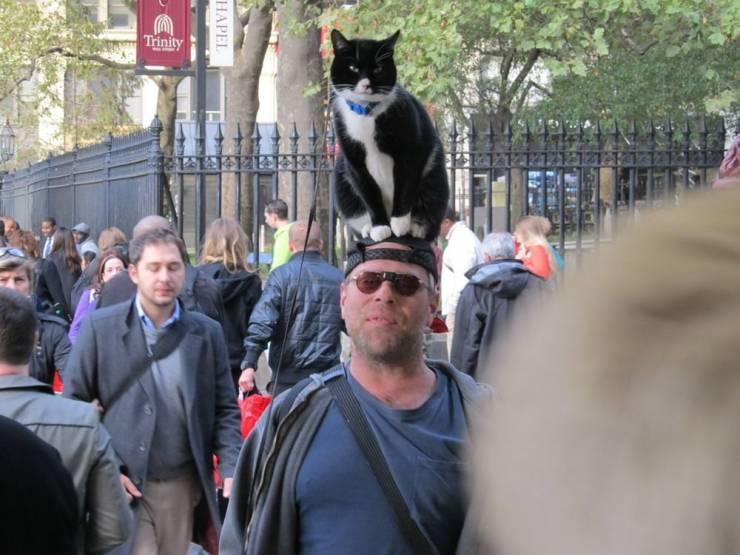Кот сидит на голове у мужчины