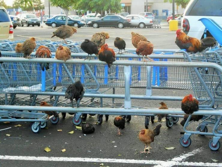 Птицы возле магазина