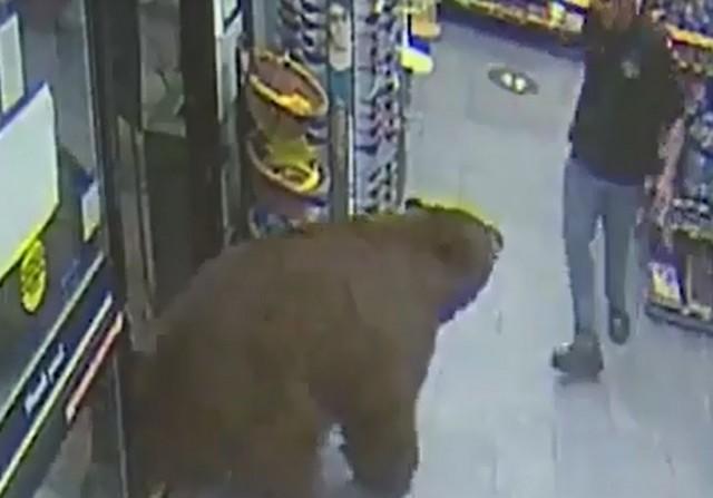 Медведь в магазине