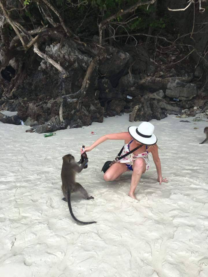Обезьяна крадет бутылку