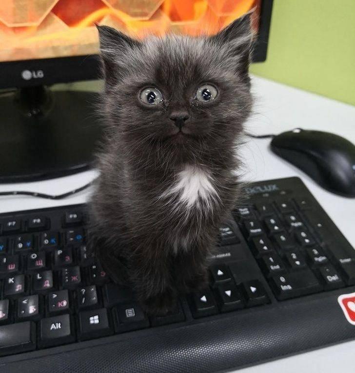 Кот сидит на клавиатуре