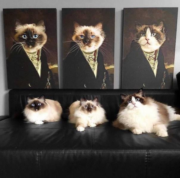 Рисунок троих котов