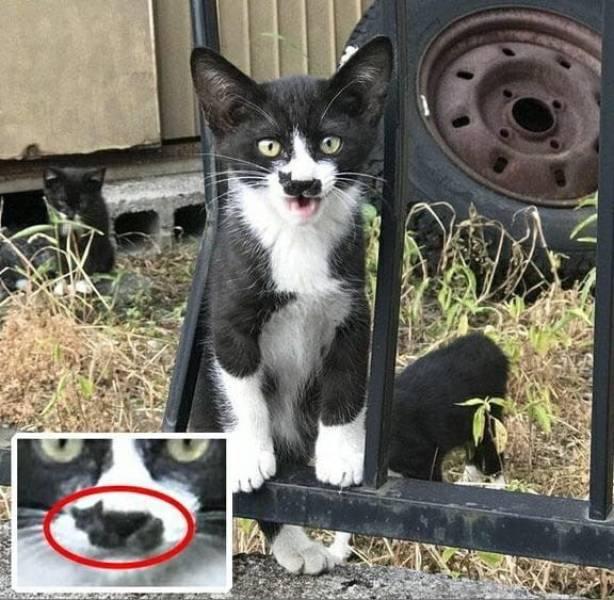 Кот с черным пятном на морде