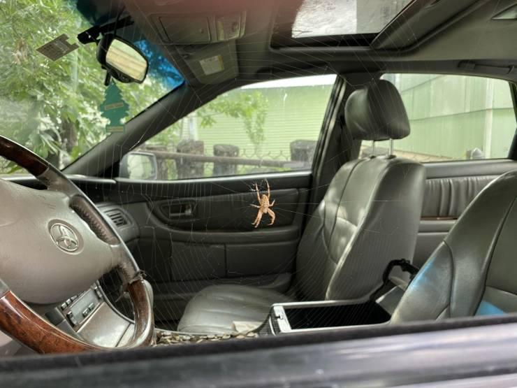 Паук захватил автомобиль